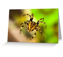 Macro Spider Greeting Card