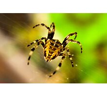 Macro Spider Photographic Print