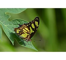 Exotic butterfly Photographic Print
