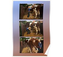 The girl and the cow - triptych 1 Poster