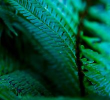 Dark Fern Fronds. by wildscape