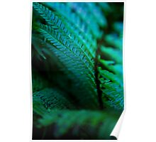 Dark Fern Fronds. Poster