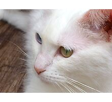 Eyes and whiskers Photographic Print