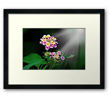 THE WONDERS OF NATURE Framed Print