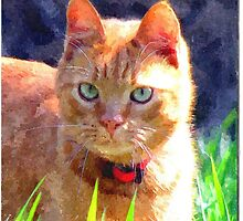 Pepe-Guiseppe No1 Stray by Dennis Melling