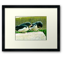 Swallows- #1 Framed Print