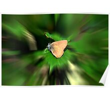 BUTTERFLY OR INVASOR Poster