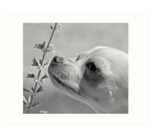 Chihuahua and the Important Message--Take Time to Smell the Flowers Art Print