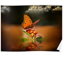 Butterfly On The Lookout Poster