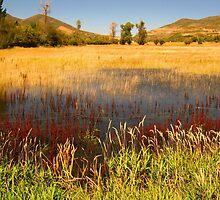Wetlands in the Mountains, Utah by JoAnn Glennie