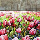 Tulips In Pink by BaVincio
