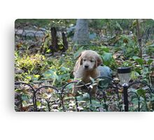 I Did NOT Destroy The Hosta Bed- 10 Canvas Print
