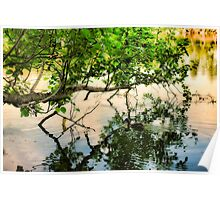 Tree, Duck, Pond Poster