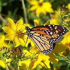 Monarch's Gold 1 by WalnutHill