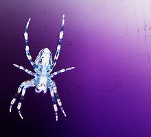 Negative Spider by Chris Day