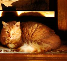 Do Cats Dream About Their Kittenhood? by Nadya Johnson