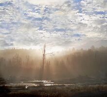 Morning Light by Gisele Bedard