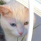 Kitten in Patterned Sunlight by ♥⊱ B. Randi Bailey