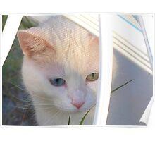 Kitten in Patterned Sunlight Poster