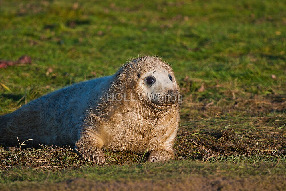 Pup Seal by Elaine123