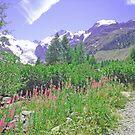 Morteratsch Glacier Trail Switzerland by Monica Engeler