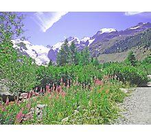 Morteratsch Glacier Trail Switzerland Photographic Print