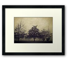 Foggy Trees at Winter time  Framed Print