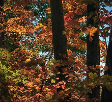 Autumn Foliage by Aaron Campbell