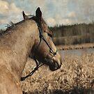 Buckskin Horse overlooking Pond by NaturePrints