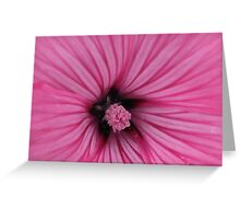 Touch of Pollen Greeting Card