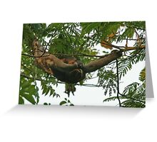 Three Toed Sloth and Baby Greeting Card