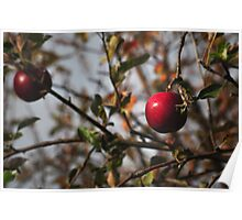 Orchard Apple Poster