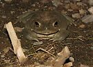 Sonoran Desert Toad (a.k.a Colorado River Toad) by Kimberly Chadwick
