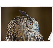 Eagle Owl Profile Poster