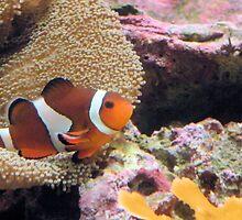 Clown Fish by Rosalie Scanlon