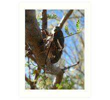 Cicada ~ Cacama Valvata (Male) Art Print