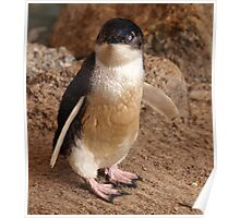 Fairy Penguin Poster