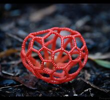 Red Cage Fungus  by Carol Knudsen