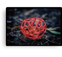 Red Cage Fungus  Canvas Print