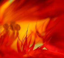 inferno by Iris MacKenzie