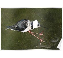 What bird is it? Phillip Island Wildlife Park, Vic. Poster