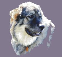 Molly - A Great Pyrenees by lar3ry