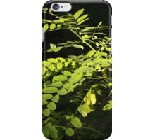 Young branches of the acacia tree iPhone Case/Skin
