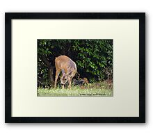 Dining Out Framed Print
