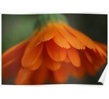 orange scales Poster