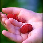 Hand picked rasberries by soniarene