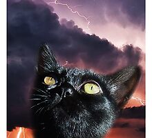 Thunder Cat by Saucepot Prints
