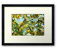 Looking Up The Trees Framed Print