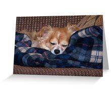 Long Coat Chihuahua Sleeping Greeting Card