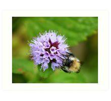 Bee & Flower  Art Print